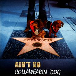 Ain't No Collawearin' Dog | Dodax.ca