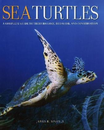 Sea Turtles | Dodax.ch