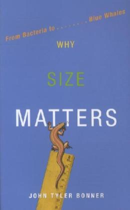 Why Size Matters | Dodax.pl