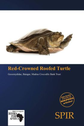 Red-Crowned Roofed Turtle | Dodax.at