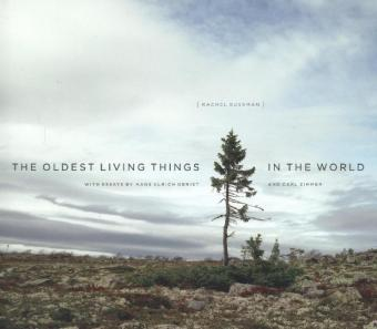 Oldest Living Things in the World | Dodax.pl