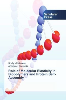 Role of Molecular Elasticity in Biopolymers and Protein Self-Assembly | Dodax.pl