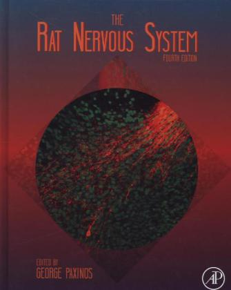 The Rat Nervous System | Dodax.ch
