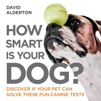 How Smart Is Your Dog?   Dodax.ch