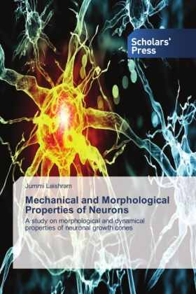 Mechanical and Morphological Properties of Neurons | Dodax.pl