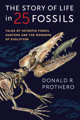 Story of Life in 25 Fossils | Dodax.de