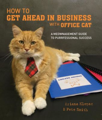 How to Get Ahead in Business with Office Cat   Dodax.pl