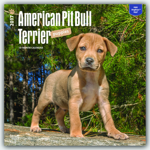 American Pit Bull Terrier Puppies 2017 | Dodax.at