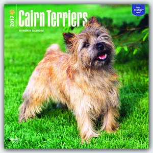 Cairn Terriers 2017 | Dodax.at