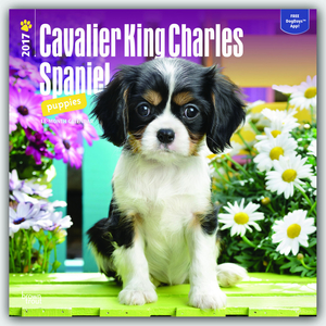 Cavalier King Charles Spaniel Puppies 2017 | Dodax.at