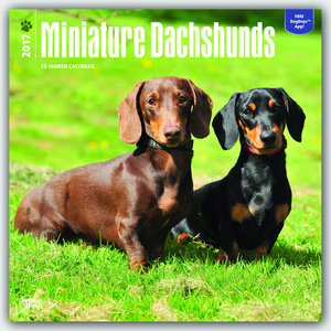 Miniature Dachshunds 2017 | Dodax.at