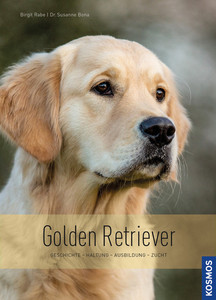 Golden Retriever | Dodax.at