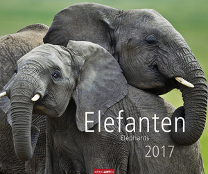 Elefanten 2017 | Dodax.at