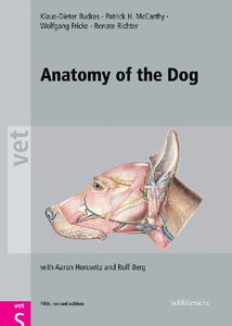 Anatomy of the Dog | Dodax.pl